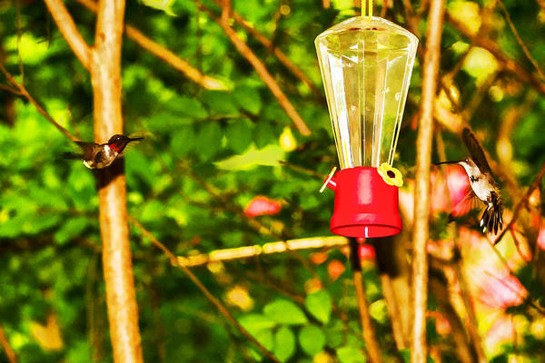 Photograph - Hummingbirds - In Flight - Pit Stop by Barry Jones