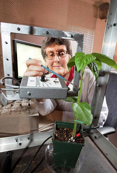 Ac Dc Wall Art - Photograph - Plant Disease Transmission Research by Stephen Ausmus/us Department Of Agriculture