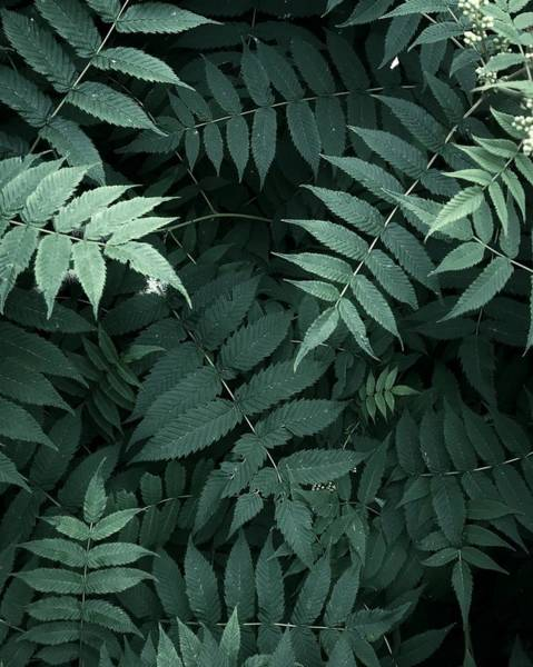 Plants In Forest Art Print by Alexandr Sherstobitov
