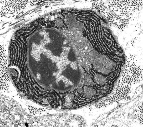 Plasma Cell Art Print