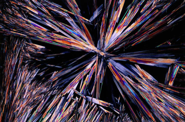 Cholesterol Photograph - Plm Of Crystals Of Cholesterol by Sidney Moulds/science Photo Library