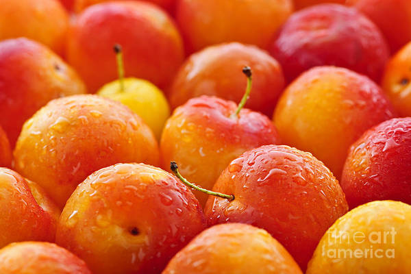 Wall Art - Photograph - Plums by Elena Elisseeva