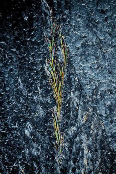 Biomedical Engineering Wall Art - Photograph - Polyethylene Glycol Crystals by Antonio Romero/science Photo Library