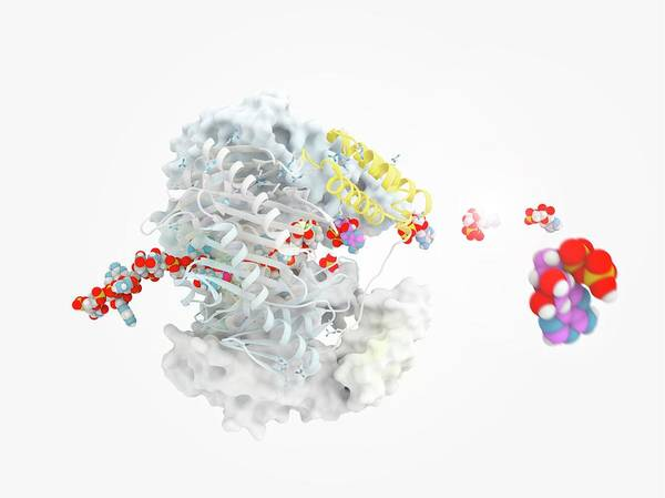 Quaternary Photograph - Polynucleotide Phosphorylase Molecule by Ramon Andrade 3dciencia