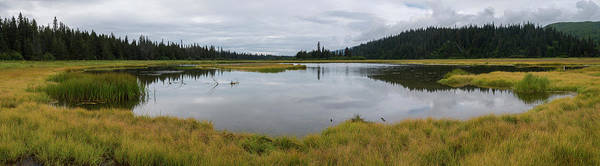 Boreal Forest Photograph - Pond In Middle Of Sedge Meadow by Panoramic Images