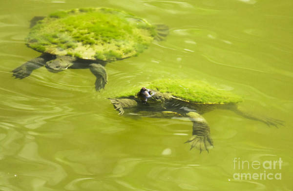 Turtle Photograph - Pond Turtles by Jorgo Photography - Wall Art Gallery