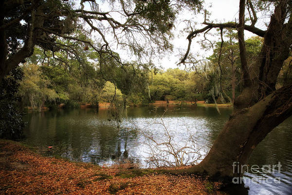 Photograph - Pond View by John Rizzuto