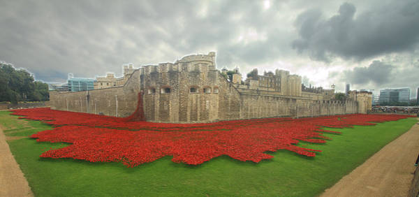 Tower Of David Photograph - Poppies Tower Of London Collage by David French