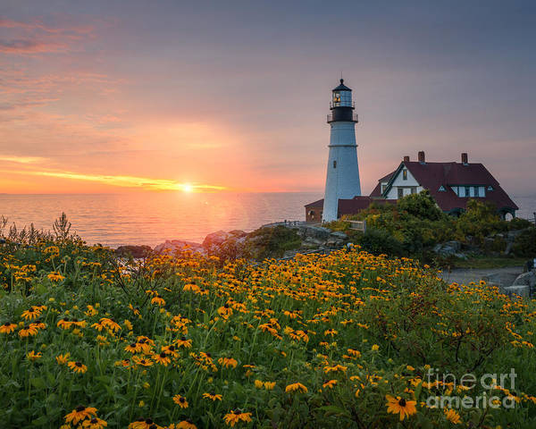 Flower Head Photograph - Portland Head Light Sunrise  by Michael Ver Sprill