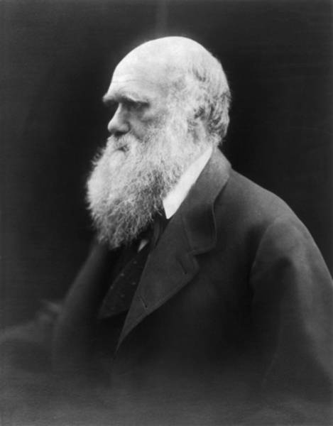 Head And Shoulders Photograph - Portrait Of Charles Darwin by Julia Margaret Cameron