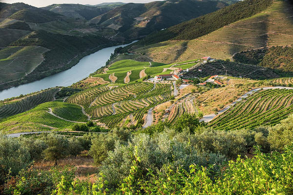 Douro Wall Art - Photograph - Portugal, Douro Valley, Douro River by Emily Wilson