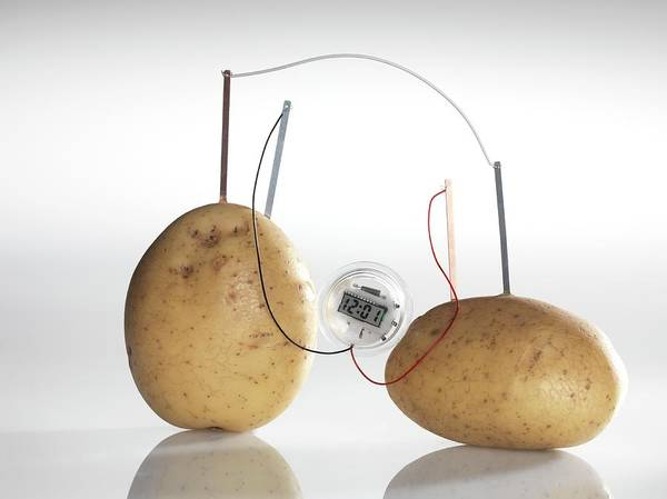 Wall Art - Photograph - Potato Clock by Tek Image/science Photo Library