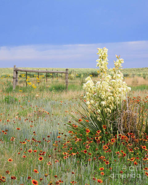 Wall Art - Photograph - Prairie Bloom by Paul Moore