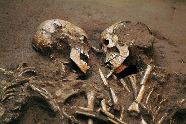 Wall Art - Photograph - Prehistoric Skeletons by Pasquale Sorrentino/science Photo Library