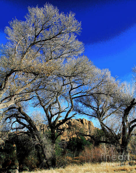 Photograph - Prescott Blues by Larry Oskin