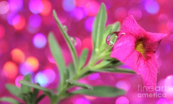 Petunias Photograph - Pretty In Pink by Krissy Katsimbras