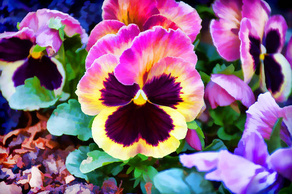 Photograph - Pretty Pansies by Jeanne May
