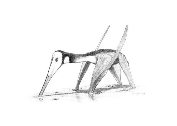 Prehistory Photograph - Pterosaur (pterodactylus Kochi) by John Conway/science Photo Library