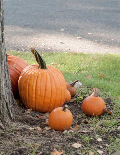 Photograph - Pumpkins by Jim DeLillo
