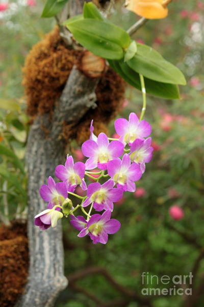 Wall Art - Photograph - Purple And White Orchid by Eric Irion