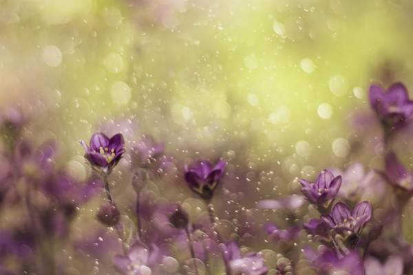 Garden Photograph - Purple Dream by Delphine Devos