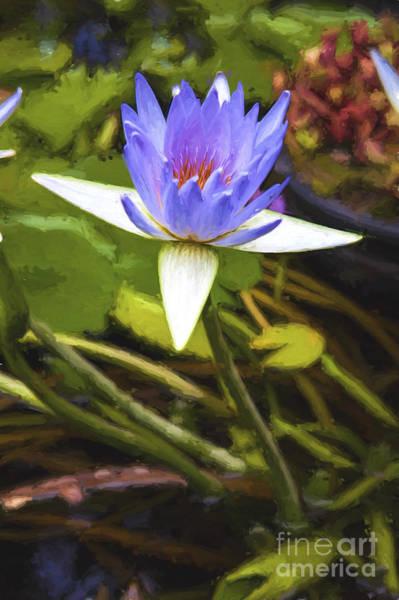 Wall Art - Photograph - Purple Water Lily by Sheila Smart Fine Art Photography
