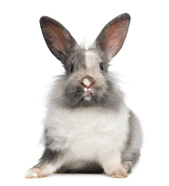 Belgium Photograph - Rabbit Sitting by Life On White