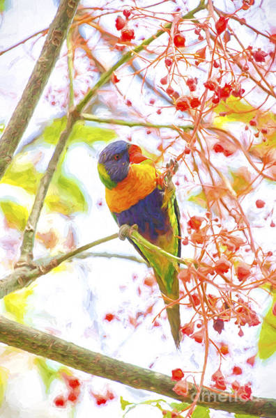 Wall Art - Photograph - Rainbow Lorikeet In Flame Tree by Sheila Smart Fine Art Photography