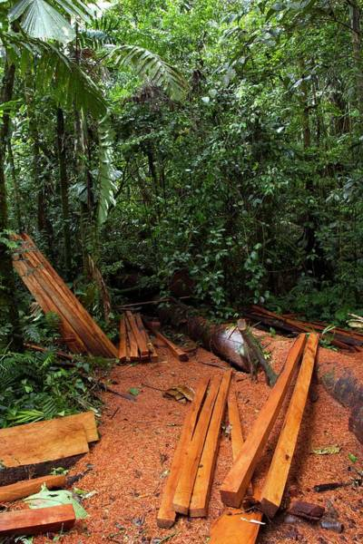 Wall Art - Photograph - Rainforest Logging by Dr Morley Read/science Photo Library