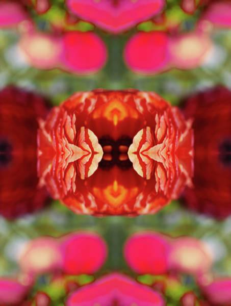 Photograph - Ranunculus Flower by Silvia Otte