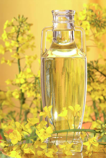 Wall Art - Photograph - Rapeseed Oil And Flowers by Lea Paterson/science Photo Library