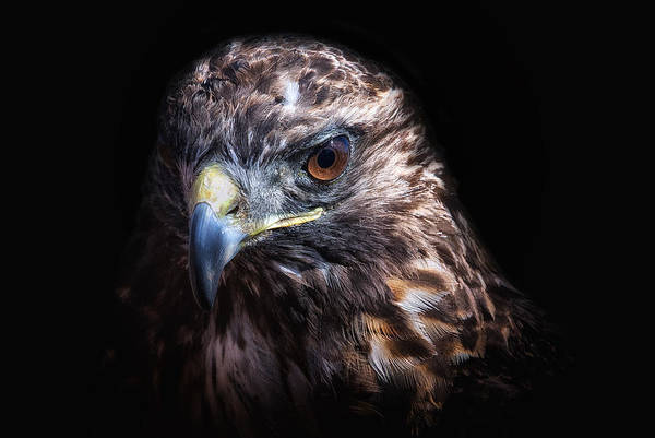 Photograph - Raptor by Ghostwinds Photography