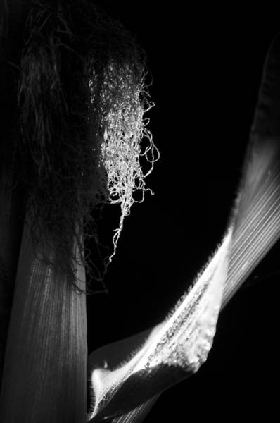 Reap Photograph - Reap by Matthew Blum