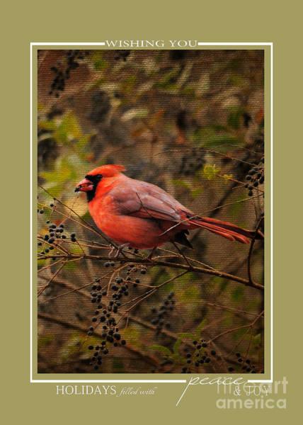 Photograph - Red Cardinal Song Bird Christmas Cards by Jai Johnson