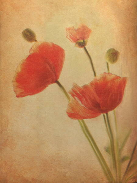 Painting - Red Poppies by Dennis Buckman