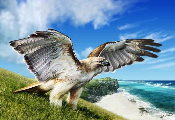 Red-tailed Hawk Art Print by Owen Bell