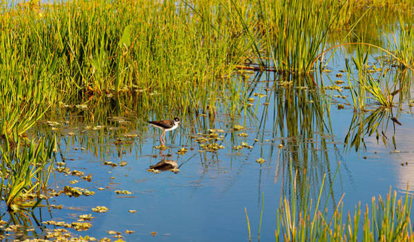 Boynton Photograph - Reflection Of A Bird On Water, Boynton by Panoramic Images
