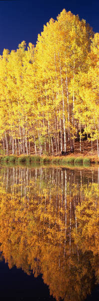 Telluride Photograph - Reflection Of Aspen Trees In A Lake by Panoramic Images