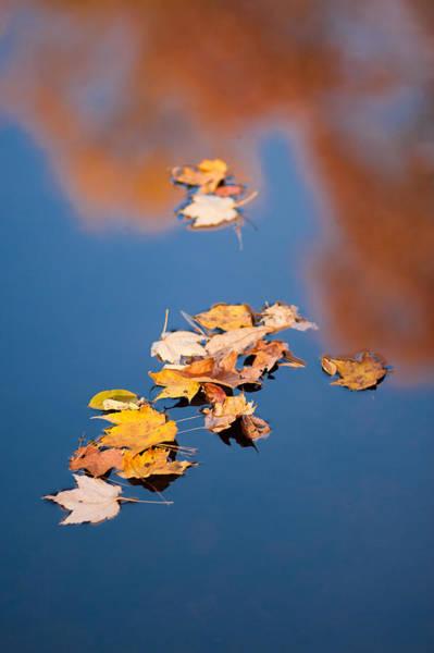 Photograph - Reflections In Blue by Joye Ardyn Durham