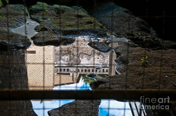 Wall Art - Photograph - Reflections by Marion Galt