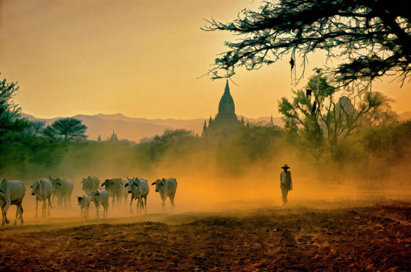 Dust Photograph - Returning From Pasture by Claude Letien