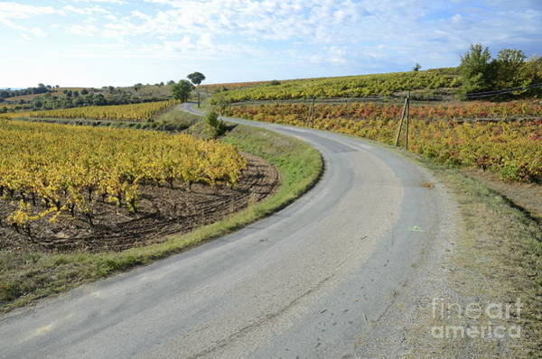 Wall Art - Photograph - Road By Vineyards With Fall Foliage by Sami Sarkis