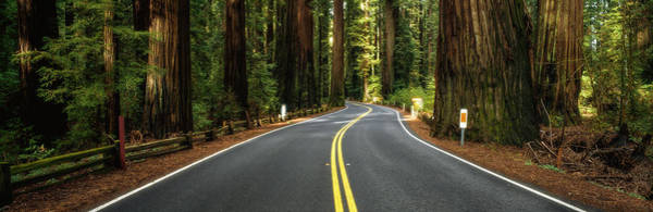 Wall Art - Photograph - Road Winding Through Redwood Forest by Panoramic Images