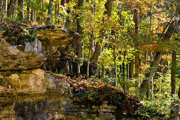 Photograph - Rock Shelf And Forest by Ed Gleichman