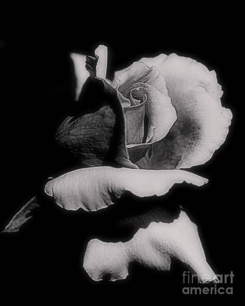 Photograph - Rosebud In Black And White by Smilin Eyes  Treasures