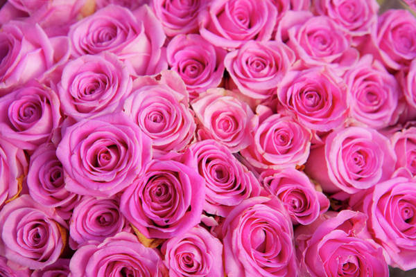 Wall Art - Photograph - Roses For Sale In A Florist by Owen Franken