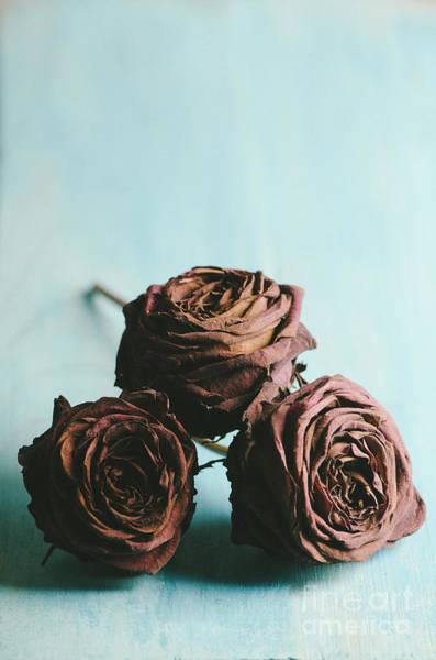 Wedding Flower Photograph - Roses by Jelena Jovanovic