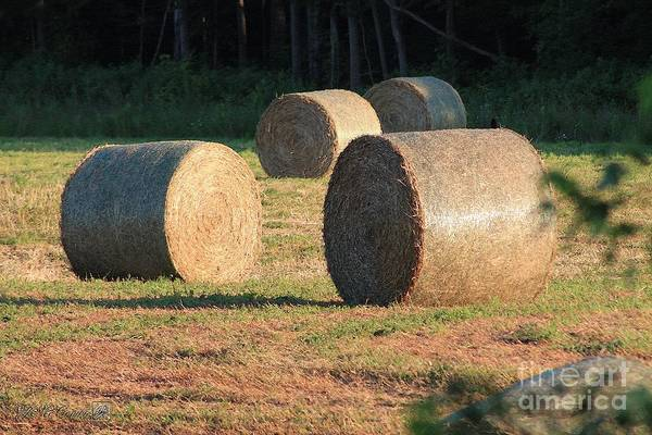 Meadowlands Painting - Round Hay Bales by J McCombie