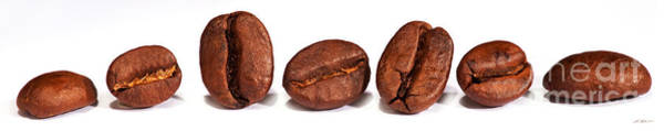 Wall Art - Photograph - Row Of Coffee Beans by Iris Richardson