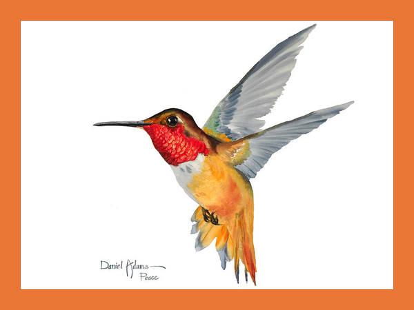 Painting -  Da144 Rufous Hummingbird By Daniel Adams by Daniel Adams